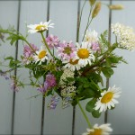 Daisies, Clover, Queen Anne's Lace, Purslane